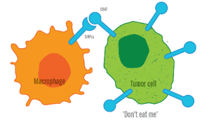 EssenBio_Infographic_TumorCell1.png
