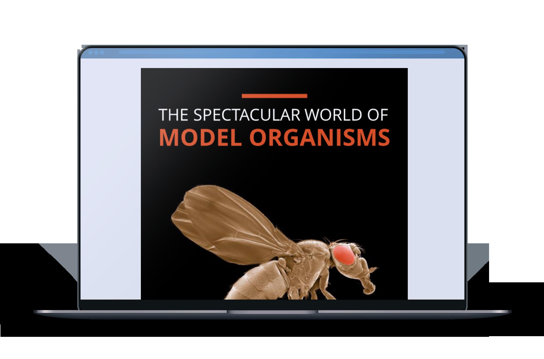 TheSpectacularWorldOfModelOrganisms